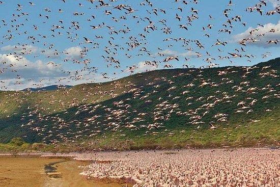 2 Days Lake Elementaita National park Safari