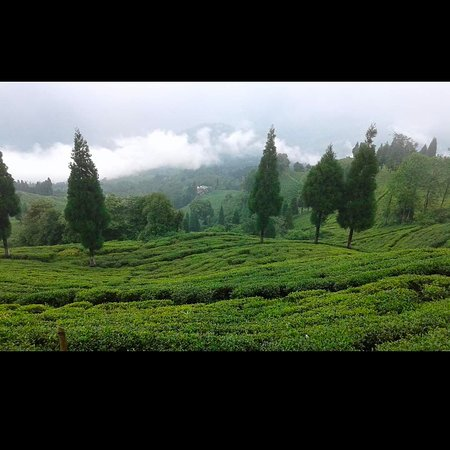 Delhi, NY: Winter holding package plan to Darjeeling n feel the beauty of queen of hill.  Loyal travel offer you best winter package.  Further details contact 9932202982 you can wats app me also in this number...