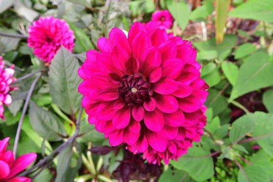 Fenton House: Flower
