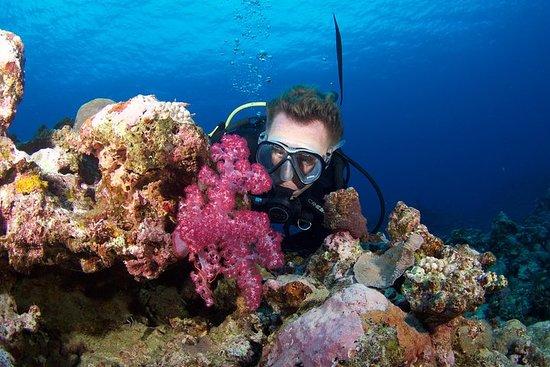 Scuba Diving Tanna Island Vanuatu - Volcano Island Divers