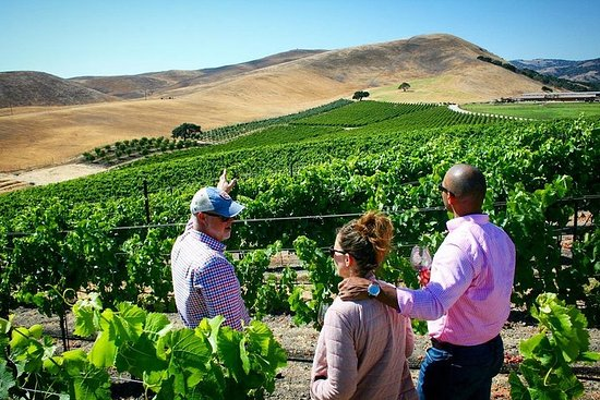 獨家,私人地點,葡萄酒之旅-小團體