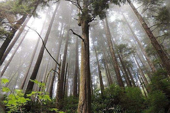 Eco Hiking Tours i nærheten av Victoria BC