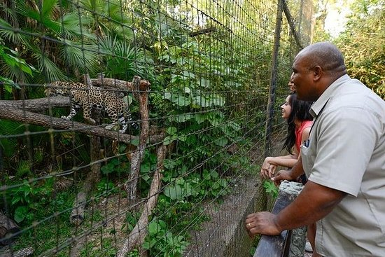 Skip the Line: The Belize Zoo...