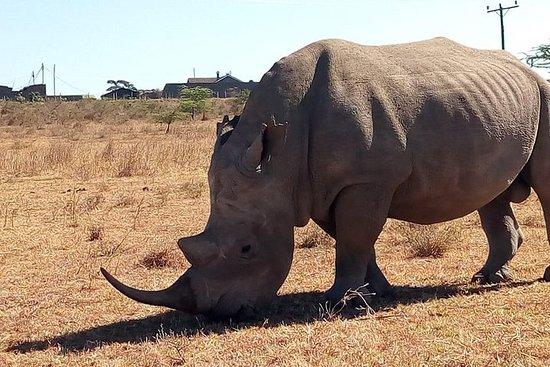 Safari Tour; Nairobi nationalpark