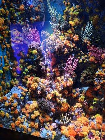 South East Asia (S.E.A.) Aquarium™: Coral