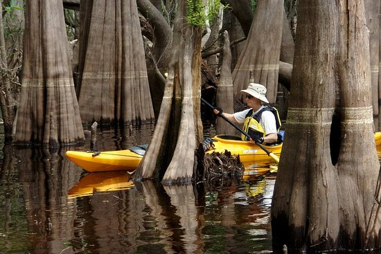 The Mysterious Blackwater Creek- 9 mile paddle