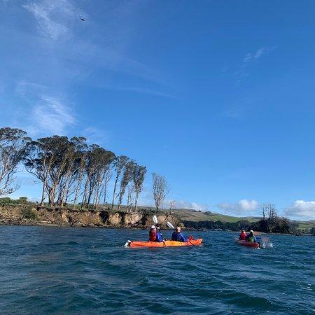 Fabulous kayaking in north Tamales Bay!