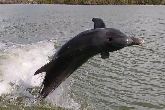 2 Hour Dolphin, Birding and Shelling Tour