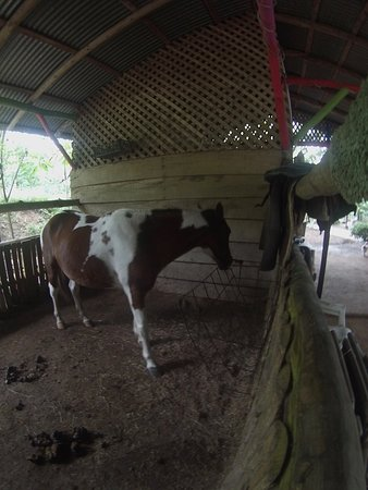 Horse boxing