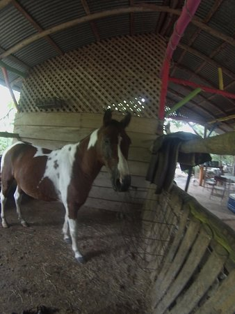 Horse with skin infection