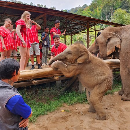 Bamboo Elephant Family Care