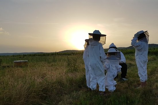 When the bees go to sleep ... Evening tours to the bee havens St...