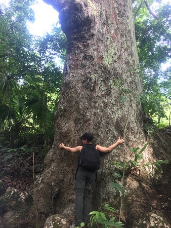 Hugging an ancestral tree of the Tropical dry forest