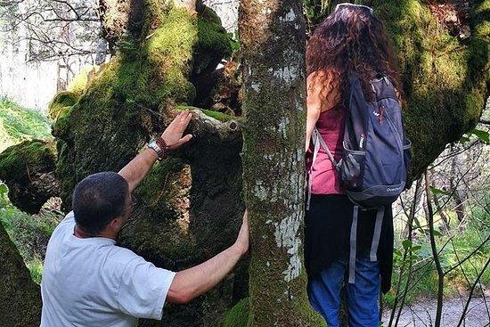 Baños del Bosque - Shinrin Yoku Terapeutico ,en bosques sagrados...