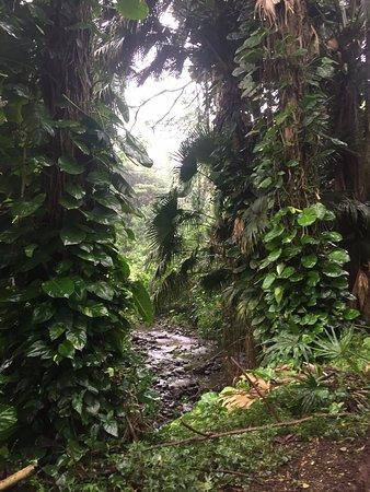 まるで熱帯雨林のジャングル