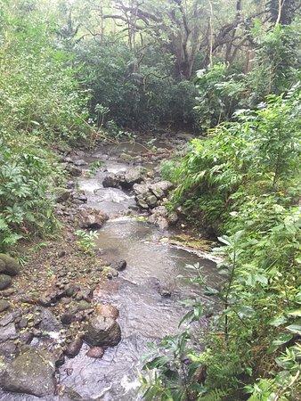 トレイル中には川がありました。この日は雨だっため水の量が多めのような・・・