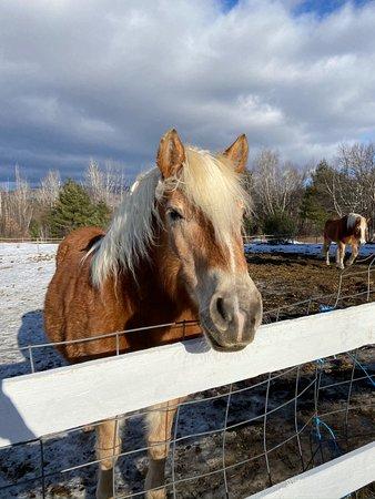 Rumford, ME: Friendly horses