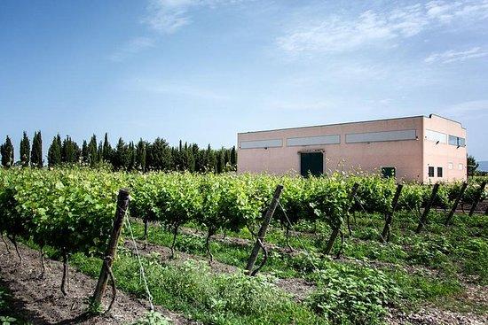 Tour della cantina con degustazione di vini biologici e prodotti
