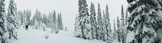 Best of Mount Rainier National Park from Seattle: All-Inclusive Small-Group Tour: Snowshoeing panorama.