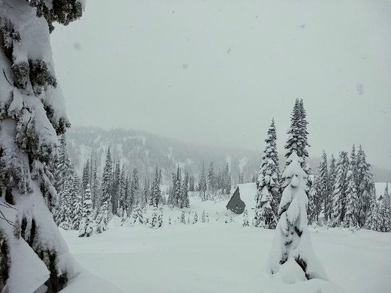 Best of Mount Rainier National Park from Seattle: All-Inclusive Small-Group Tour: Cabin in the woods.