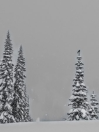 Best of Mount Rainier National Park from Seattle: All-Inclusive Small-Group Tour: Grey jay spotted while snowshoeing.