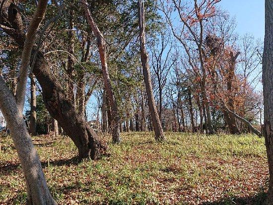 Mt.Kanamori Hurusato No Forest