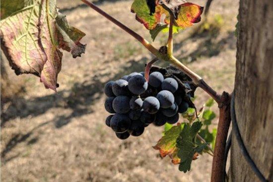 Ruta del vino y maridaje de trufas