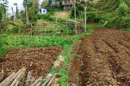 Wandeling naar een lokale boerderij