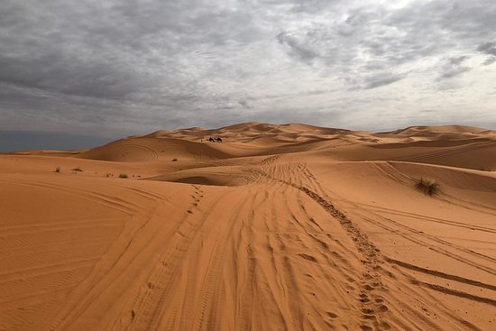 sahara kamel tårn