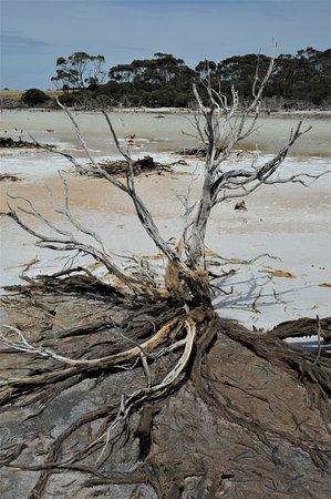 Salt Creek, Australia: Uno dei tanti deserti di sale in Australia: si susseguono quelli asciutti, quelli acquitrinosi e quelli che sono un mix. come questo - Australia meridionale.  Cliccare sulla foto per vederla come scattata.