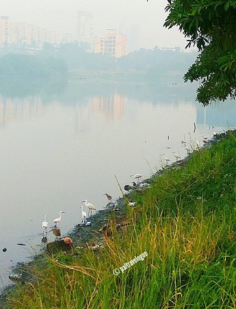 Lovely foggy winter morning amidst nature and birds at Nerul Lake