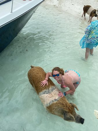 Famous Swimming Pigs Tour Bahamas - Full Day Powerboat to Exuma from Nassau: hanging with the pigs
