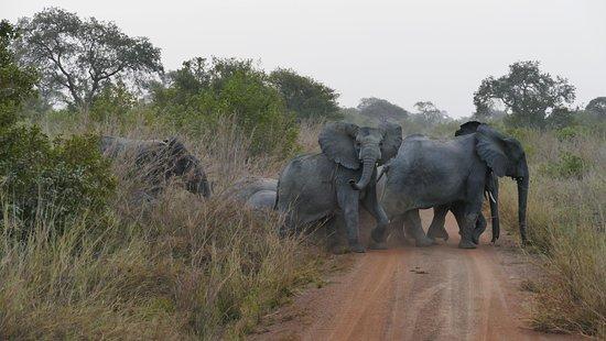 Pendjari National Park, เบนิน: Éléphants qui traversent