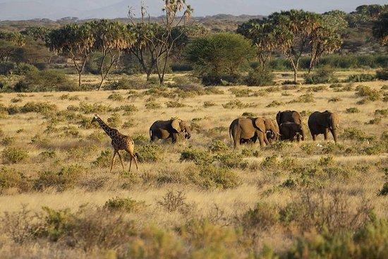 Safari classico di 3 giorni in Maasai