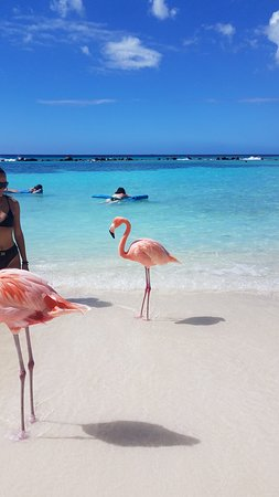 One of the beautiful flamingos we got to see on Flamingo Beach