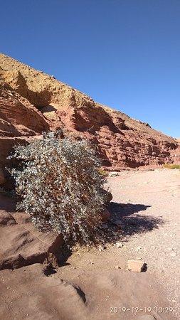 Скалы действительно красного цвета.