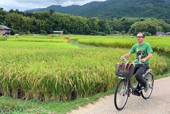 Tour à vélo dans l'ancienne Asuka