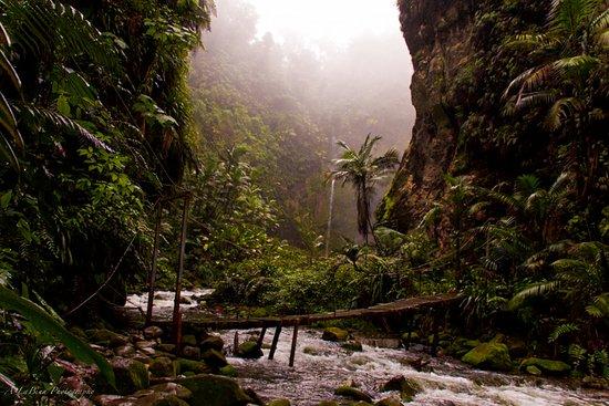 באחוס דל טורו, קוסטה ריקה: waterfall just hiding behind the corner
