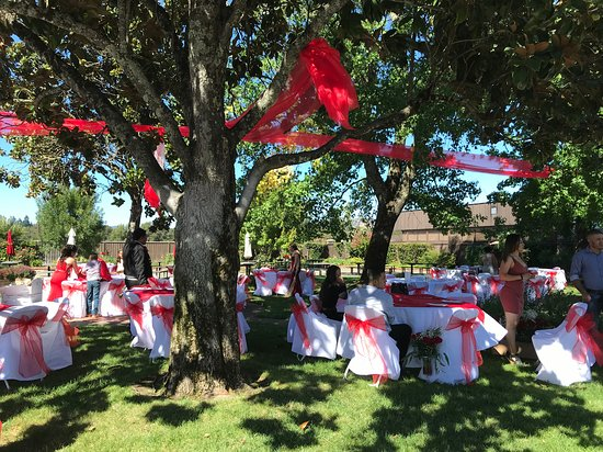 Redwood Valley, CA: Party set up outside in the garden
