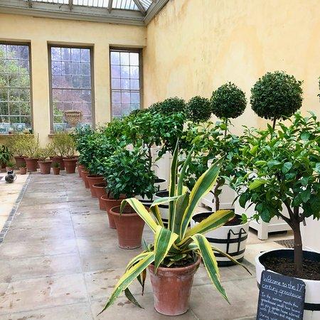 Dyrham Park, The Orangery