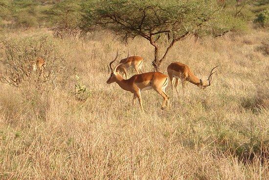 7 dager Samburu - Naivasha-sjøen - Mara Safari
