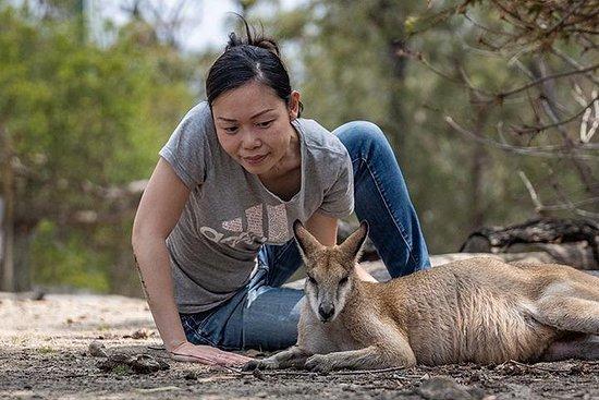 Sydney Secrets - Natur, Tierwelt und...