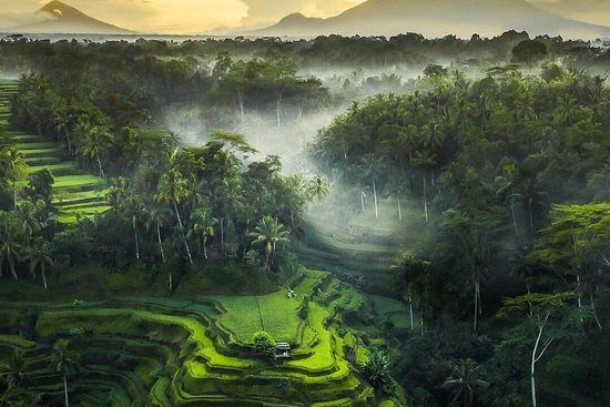 Ubud Nature Tours