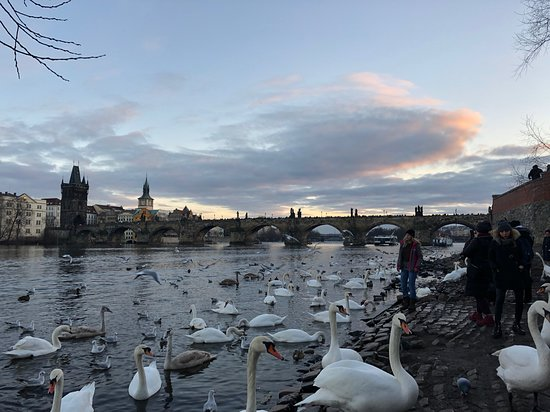 Prague 3-hour Afternoon Walking Tour including Prague Castle: Photo from our January 2020 Tour