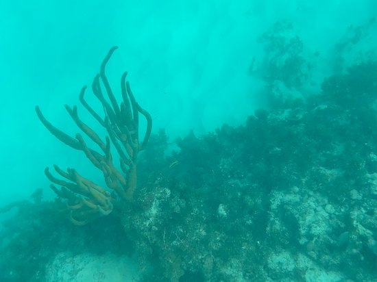Reef Explorer Multiple activity Excursion from Punta Cana by Marinarium Image