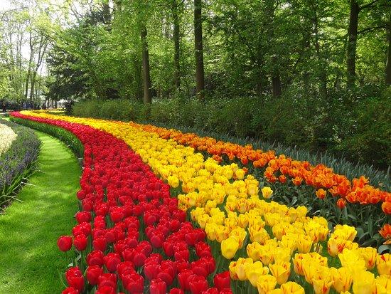 Skip the Line: Keukenhof Gardens Direct Entrance Ticket: Fleurs partout