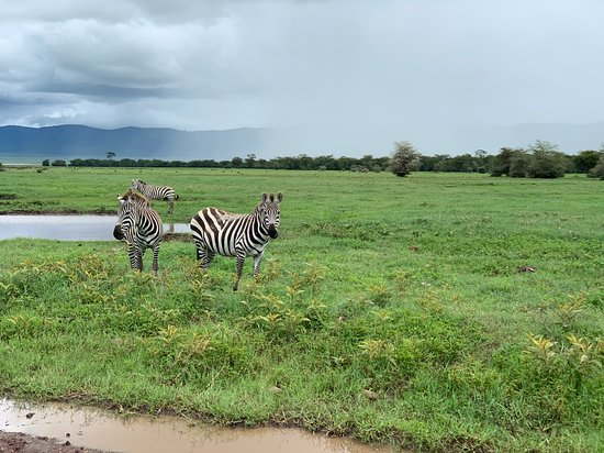 The Big 5: Some zebras from the trip