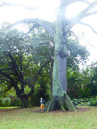 massive trees.