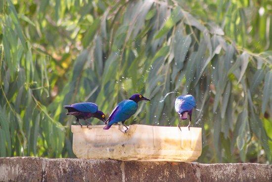 Soma, Gambia: Kaira Konko Garden