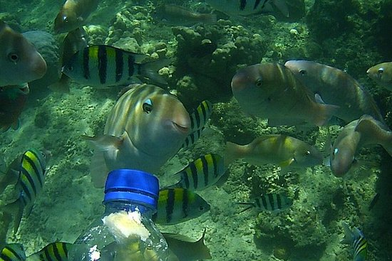 Snorkeling Tour til Amazing Coral Garden i South Gilies